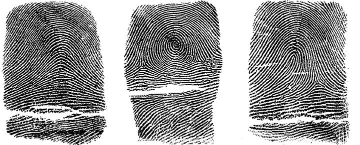 Daktiloskopska klasifikacija glavnih tipova papilarnih linija u kriminalističkoj tehnici