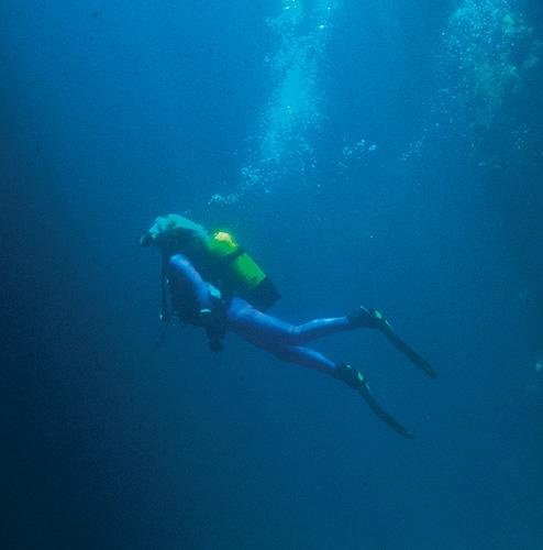Detalj podvodne fotografije Danijela Frke