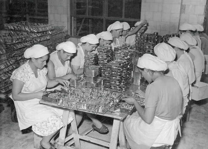 Slaganje srdela u limenke u tvornici Mirna, Rovinj, 1960-ih