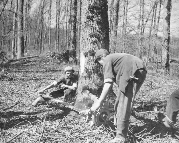Sječa drva motornom pilom kraj Topolovca, druga polovica XX. st.